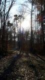 Autumn Sun Arkivbild