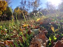 Autumn Sun Imagens de Stock