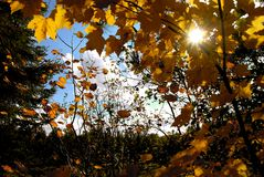 Autumn sun Royalty Free Stock Photography