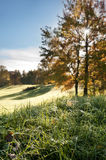 Autumn sun Stock Photography