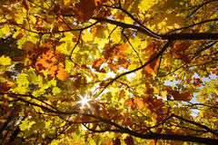 Autumn Sun Royalty Free Stock Images