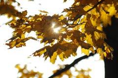 Autumn Sun Royalty-vrije Stock Afbeelding