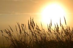 Autumn Sun imagen de archivo libre de regalías