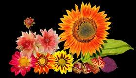 Autumn, Sun Flower, Autumn Colours Stock Images