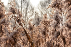 Autumn sun. The fluffy plant will dispel the seeds downwind soon and in the spring they will grow on a new place Royalty Free Stock Photo