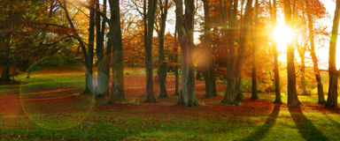 Autumn sun in a forest with colorful leaves Stock Photo