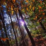 Autumn sun Royalty Free Stock Photo