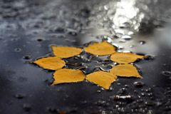 Autumn sun in the puddle Royalty Free Stock Photo