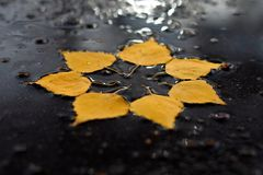 Autumn sun in the puddle Royalty Free Stock Photos
