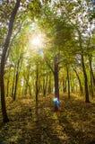 Autumn Sun Rays Lizenzfreies Stockbild