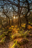 Autumn Sun Rays Stockfotografie