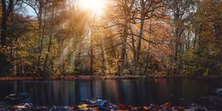 Autumn sun rays sunbeam appear trought the beautiful tree branches and leaves in a city park with a pond in the front of. The picture. Wide short. Panoramic Royalty Free Stock Photo