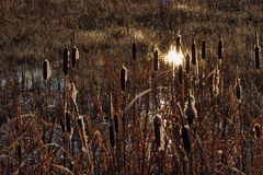 Autumn Sun on Swamp stock photography