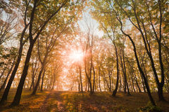Autumn sun in the trees Royalty Free Stock Image