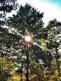 Autumn sun through the trees Royalty Free Stock Photos