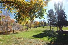 Autumn Sunbeam stock afbeeldingen