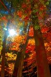 Autumn sunlight on the colored trees. Autumn sun shining on the colored trees under old man`s cave, ohio stock image
