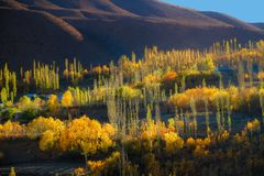 Autumn sunlight lit colorful trees and mountain in Phander valley. Pakistan. royalty free stock image