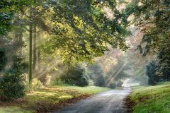 Autumn sunlight rays through the misty trees. Autumn sunlight rays through trees along a quiet rural road in the early morning mist Royalty Free Stock Photo
