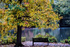 Autumn. Sunlight tree quebec natural park green autumn travel view sunrise leaf yellow orange light evening Stock Images