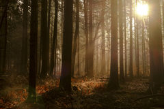 Autumn. Sunlight in the woods Royalty Free Stock Images