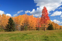 Autumn sunny day. A beautifull suny autumn suny day somhere near Ottawa Stock Photos