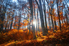 Autumn. Sunny autumn day in Carpatians  mountains Stock Images