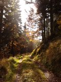 Autumn. Sunny day in a forest Stock Photography