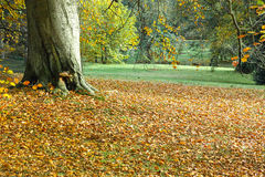 Autumn. Sunny autumn day in the grounds of Sandringham House, Norfolk, a country home the monarch of the UK stock photo