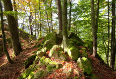 Autumn sunny day in mountain Carpathian forest Stock Photo