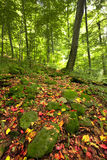 Autumn sunny day in mountain Carpathian forest Stock Image