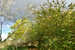 Autumn on sunny day ,park , tree,branches. Royalty Free Stock Photos