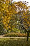 Autumn Sunny Day in the Park Stock Images
