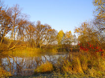 Autumn sunny day at wood lake Royalty Free Stock Image