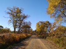 Autumn sunny day on wood road Stock Photos