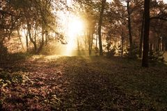 Autumn sunny forest nature. Colorful and foggy fall tree. royalty free stock photo