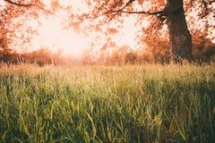 Autumn Sunny Forest Trees And Green Grass Naturträsolljus Arkivbilder