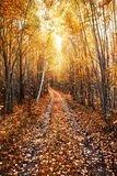Autumn sunny landscape with a forest road. Karelia. Russia Stock Image