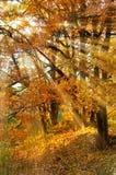 Autumn sunny landscape Stock Photo