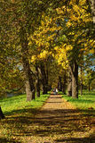 Autumn sunny landscape with   in Pushkin garden. Stock Images