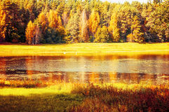 Autumn sunny landscape of Soroti river and autumn yellowed forest trees in Pushkinskiye Gory, Russia Stock Photography