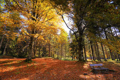 Autumn sunny orange park with bench in Slovenia Stock Photography