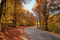 Autumn sunny orange park with road in Slovenia. Autumn sunny park with road in Slovenia. Golden and orange leaves on trees and red fallen on a ground Stock Images
