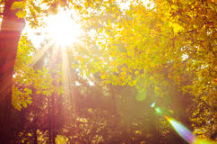 Autumn in sunny park Stock Photography