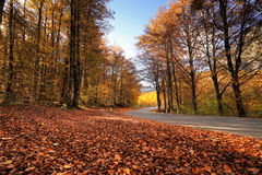 Autumn sunny park with fallen leaves and road Stock Photography