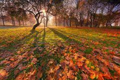 Autumn Sunny Park Landscape With Beautiful curvou a silhueta da árvore, as sombras na terra e muito mapa de queda vermelho e amar fotografia de stock royalty free