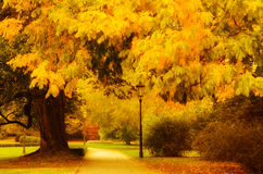 Autumn sunny park Royalty Free Stock Photos