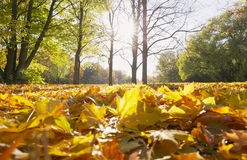 Autumn sunny park Royalty Free Stock Photos