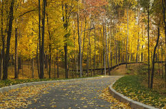 Autumn sunny park. With yellow trees and road, natural seasonal background Royalty Free Stock Photo
