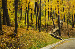 Autumn sunny park. With yellow trees and woodeb stairs, natural seasonal background Royalty Free Stock Photo
